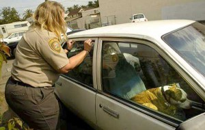 officer opening a car